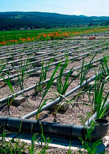 juebner-pflanzen-klaeranlage